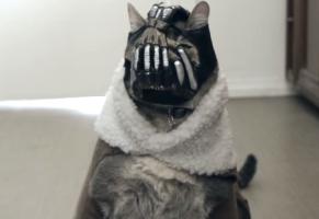 BaneCat è il peggior animale domestico che potreste avere – VIDEO