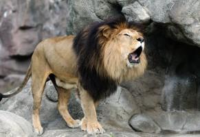Cecil, chi si indigna per la sua morte sbaglia di grosso